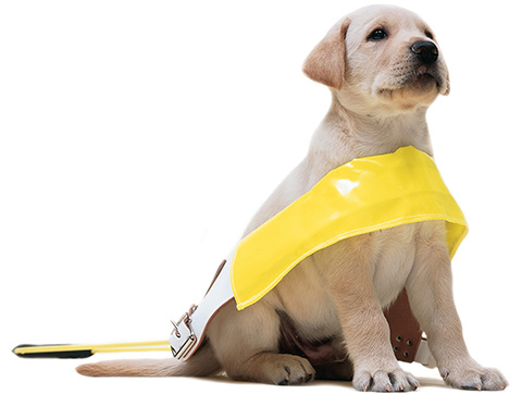 Guide-Dog-appeal