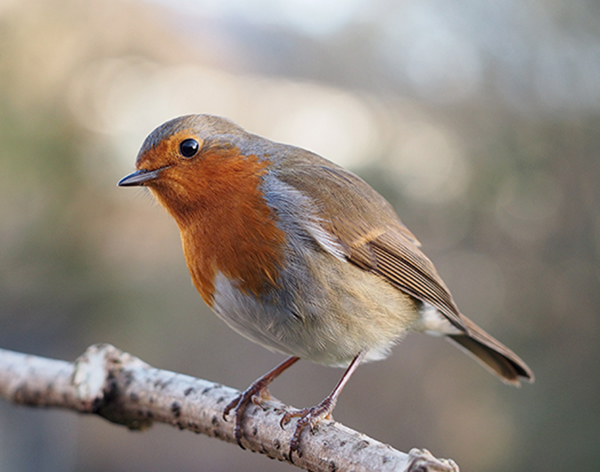 Join DMU for The Big Garden Birdwatch